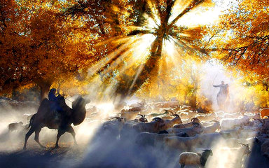 【躺着去赏秋】额济纳旗胡杨林6日 西安出发 双卧火车团
