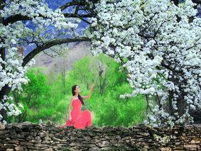 春到川藏-2019丹巴梨花-林芝桃花沟-波密嘎朗村川藏春季顶级赏花11日深度游