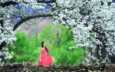 【春到川藏】丹巴梨花-林芝桃花沟-波密嘎朗村川藏春季顶级赏花11日深度游