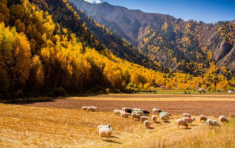 米罗亚风景区秋天图片
