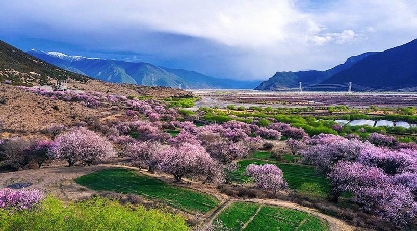 嘎朗村徜徉在花的的海洋,还有一个美丽的故事在这十里桃花中