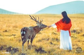 一马一红衣 一眼一深秋 一望一遥远——秋季坝上人像