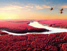 行摄红海滩-长白山红叶-盘锦红海滩-长白山-老边沟森林公园红叶-蛟河红枫谷-大石湖红叶-中华枫叶大道-排石景观-大连海岸7日秋色摄影游