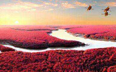 【行摄红海滩-长白山红叶】盘锦红海滩-长白山-老边沟森林公园红叶-蛟河红枫谷-大石湖红叶-中华枫叶大道-排石景观-大连海岸7日秋色摄影游