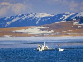 赛湖之冬-赛里木冰湖-天鹅泉-红山大峡谷6日深度游