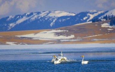 【赛湖之冬】赛里木冰湖-天鹅泉-红山大峡谷6日深度游