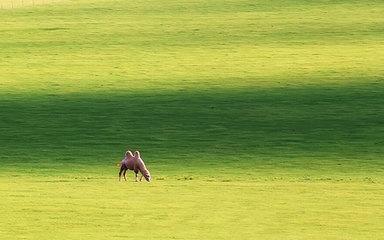 【呼伦贝尔-阿尔山穿越】扎龙保护区-大兴安岭-满洲里-室韦-黑山头-阿尔山-长春8日大环线