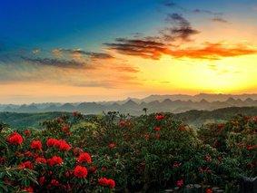 花开贵州-百里杜鹃-黄果树瀑布-格凸河-织金洞-天龙屯堡-紫云-安顺-贵阳6日深度游