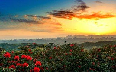 【花开贵州】百里杜鹃-黄果树瀑布-格凸河-织金洞-天龙屯堡-紫云-安顺-贵阳6日深度游